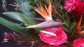 Fågel av paradiset och anthuriumen Royaltyfri Bild