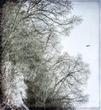 Fågel av vintern Arkivbilder