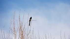 Fågel bara på en filial i vintern royaltyfri bild