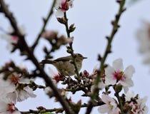 Fågel bland blommor Arkivbilder