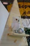 Fågel en örnuggla ett symbol av vishet Royaltyfria Foton