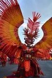 Fågel en för röd brand Arkivfoto