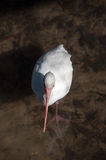 Fågel från över Royaltyfri Fotografi