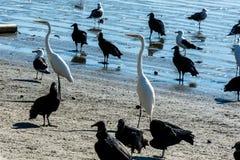 Fågel, häger, gam och fiskmåsar Royaltyfri Bild
