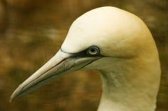 Fågel huvud Fotografering för Bildbyråer