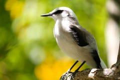Fågel i amasondjungeln Royaltyfri Fotografi