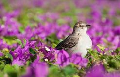 Fågel i blommor royaltyfria foton