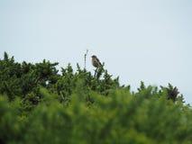 Fågel i buskarna Arkivfoton
