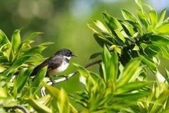 Fågel i buske arkivbild