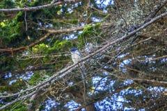 Fågel i den punktLobos delstatsparken royaltyfria foton