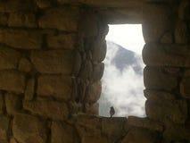 Fågel i dimman Arkivfoton