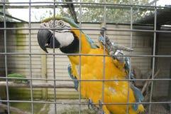 Fågel i en bur arkivbilder