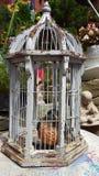 Fågel i en bur Arkivbild