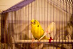 Fågel i en bur Arkivfoto