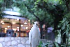 Fågel i en parkera Fotografering för Bildbyråer