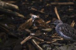 Fågel i en skog Arkivbild