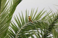 Fågel i Etiopien royaltyfri bild