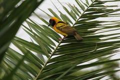 Fågel i Etiopien Royaltyfria Bilder