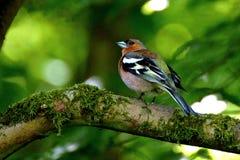 Fågel i ett träd Royaltyfri Fotografi