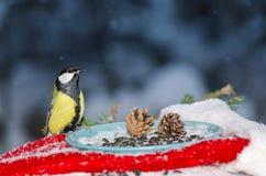 Fågel i förlagemataren av solrosfrö för jul Royaltyfria Bilder