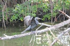 Fågel i floden Stock Illustrationer