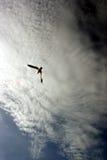 Fågel i flyg Arkivfoto