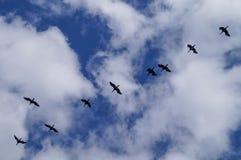 Fågel i flykten in i den blåa himlen Royaltyfri Bild