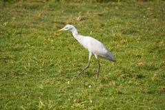 Fågel i grönt gräs, i solen Arkivfoto