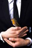 Fågel i hand Royaltyfri Bild