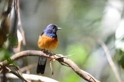 Fågel i natur Arkivfoto