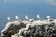 Fågel i rad Arkivbilder