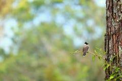 Fågel i skog Arkivfoton