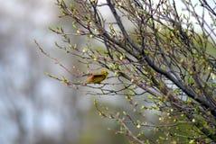 Fågel i skogen Royaltyfri Bild