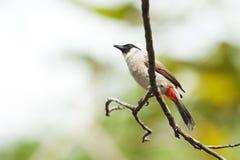 Fågel i skogen Royaltyfria Bilder