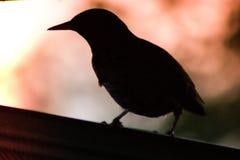 Fågel i skuggor överst av ett hus Arkivfoton