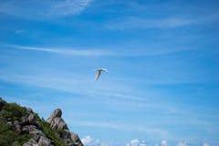Fågel i skyen Arkivfoto