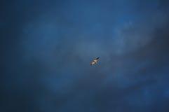 Fågel i skyen Royaltyfria Foton