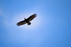 Fågel i skyen Royaltyfri Bild