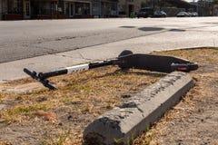 FÅGEL i smutsen bredvid gatan fotografering för bildbyråer
