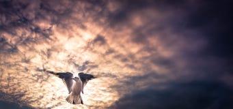 Fågel i soluppsättning Arkivbild