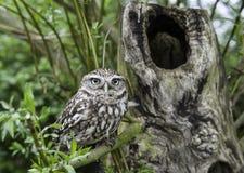 Fågel i Tree Royaltyfri Fotografi