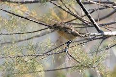 Fågel i treen Arkivbild