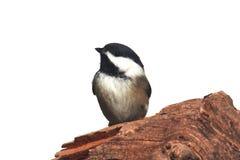 fågel isolerad stubbe arkivbild