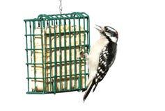 fågel isolerad stubbe royaltyfri foto