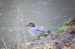 fågel little Royaltyfri Fotografi