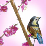 fågel little fotografering för bildbyråer