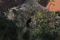 Fågel med damen Arkivbild