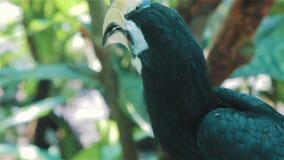 Fågel med stora ögonfrans Indonesien lager videofilmer