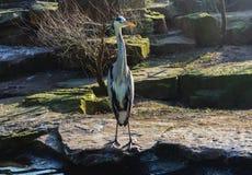 Fågel nära dammet Royaltyfri Foto
