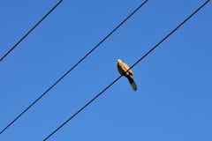 Fågel och blåttsky Arkivfoto